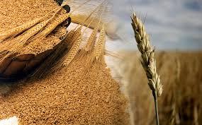 Intolleranza ed allergia al glutine
