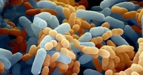 I prebiotici
