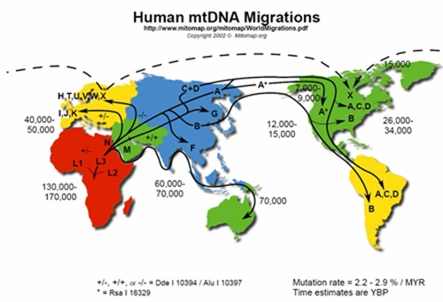 la mutazione adattiva