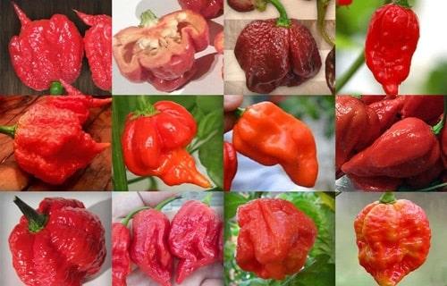 peperoncino piccante